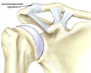 Coracoclavicular Ligament