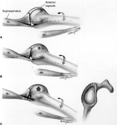 Components of the shoulder